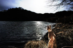 Dogs on the Lake