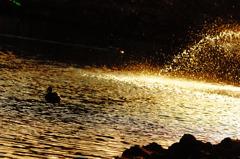 黄金の輝き