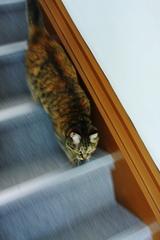 階段は走ってはダメ・・・らしいにゃっ!!
