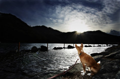 Dogs on the Lake #2