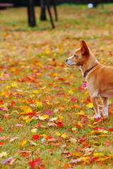 秋を見つめて!