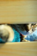 隙間から猫パ〜ンチ・・・にゃっ!!