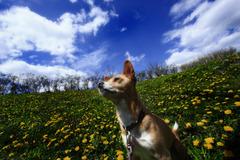 犬と花と青空と!