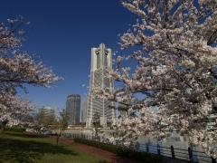 桜・・青空・・ランドマーク!
