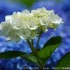 2DSC_9243ah