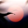 太陽と水玉2