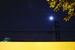 光のキャンバス・月光り