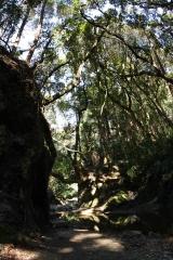 千葉のジャングル#2