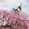 万博記念公園梅祭り