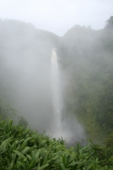 滝とウォーターと植物