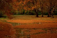公園の秋1