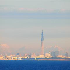 東京湾から見るスカイツリー