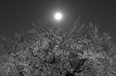 月の光に照らされて