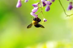 ハチも好き