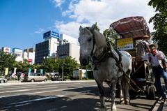 街中に馬車出現!