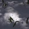 SnowShoes080210_130018