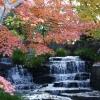 秋のヤスラギ