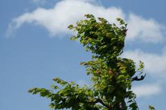 7762t 五月の風