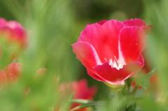 3442 畑に咲く花