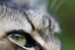 瞳の中の世界