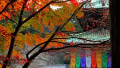 色とりどりの秋