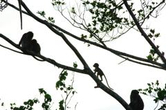 ジャングル探検その2@ボルネオ