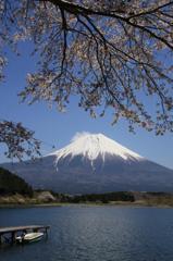 春の田貫湖