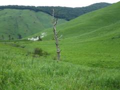 草原に立つ枯木