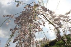 春を浴びる