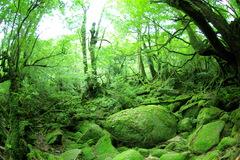 もののけ姫の森。