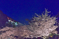 須磨浦公園の夜桜3