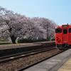 山陰本線竹野駅のサクラ