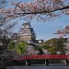 サクラと姫路城(ひめじじょう)2