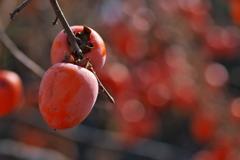 柿食えば・・・2