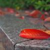 公園の桜葉の落ち葉2