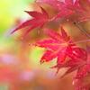 住吉神社の紅葉(モミジ)2