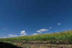 初秋の田園風景2(稲穂)