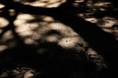 神苑の木漏れ日(こもれび)