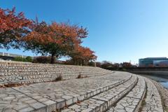 親水公園の染井吉野(そめいよしの)2