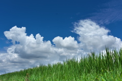 稲の上の雲