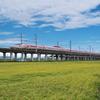 稲刈りとハローキティ新幹線