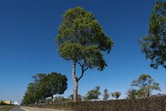 秋天(しゅうてん)下の街路樹