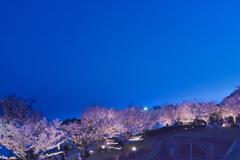 須磨浦公園の夜桜1