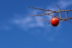 柿食えば・・・1