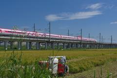 稲刈りを行くハローキティ新幹線