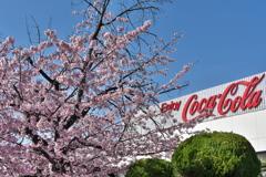 春本番、コカコーラの桜咲く