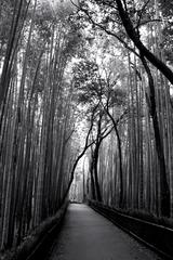 葉音と竹林