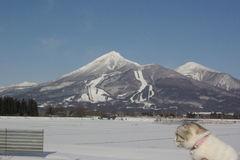 雪晴れの磐梯山を見に来たの