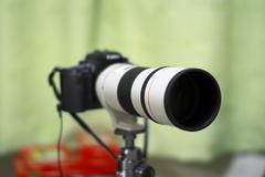 夏レンズ1(EF300F4L)