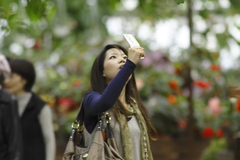 携帯カメラ女子、天上花を撮影。